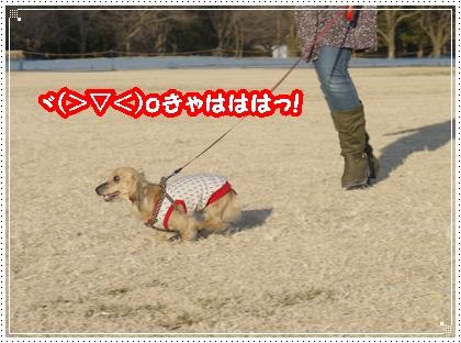dc010443_20110105124022.jpg