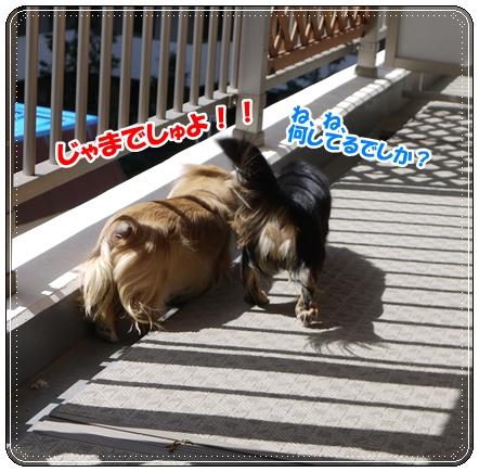 dc031904_20120321191206.jpg