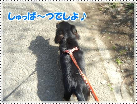 dc032110.jpg