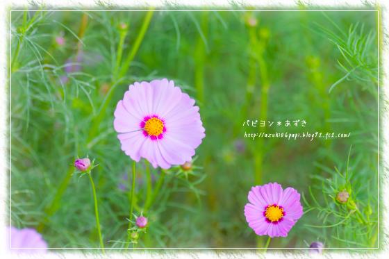 20131012_IMG_91.jpg