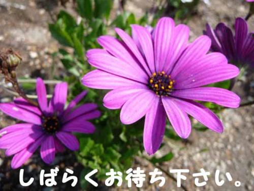 P1240012-AZUKII.jpg