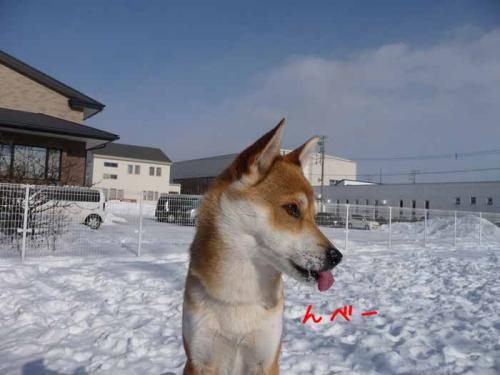 P1330279-AZUKI.jpg