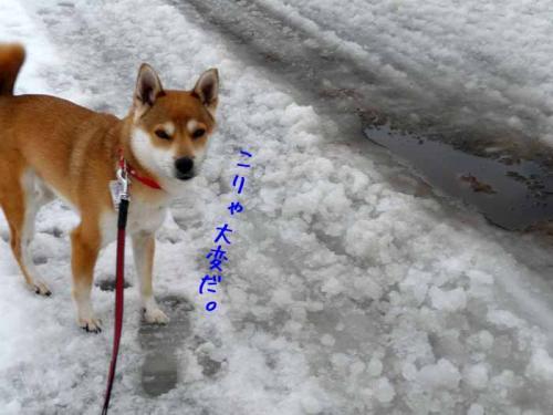 P1330480-AZUKI.jpg