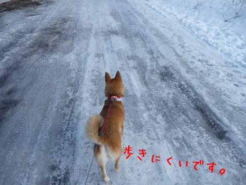 P1330539-AZUKI.jpg