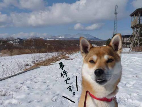 P1330643-AZUKI.jpg