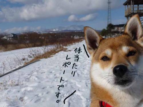 P1330644-AZUKI.jpg