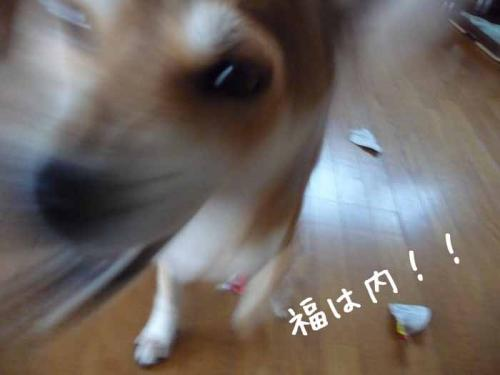 P1330801-AZUKI.jpg