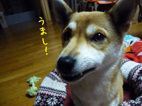 P1330821-AZUKI.jpg