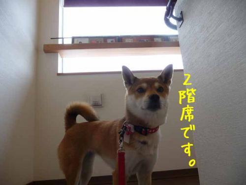 P1330964-AZUKI.jpg