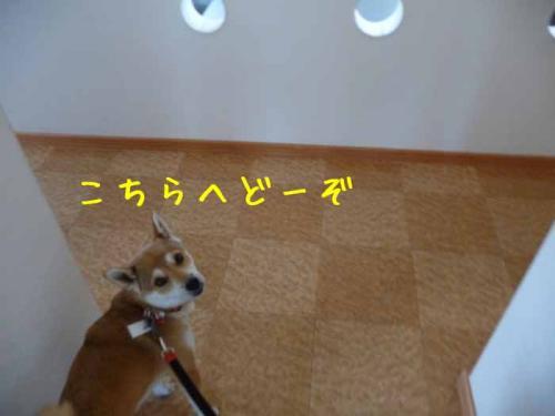 P1330965-AZUKI.jpg