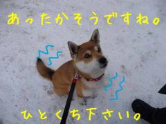 P1340004-AZUKI.jpg