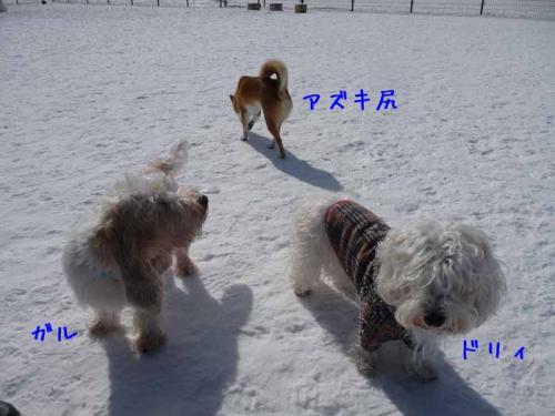 P1340260-AZUKI-AZUKII.jpg