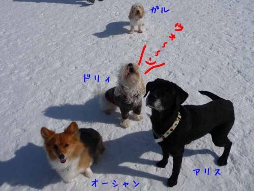 P1340265-AZUKI-AZUKII.jpg