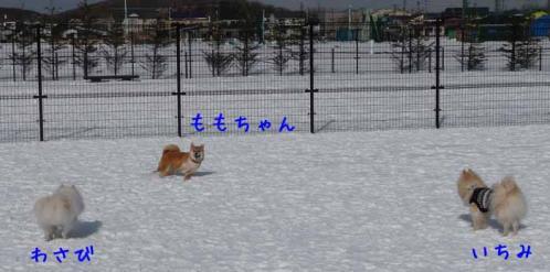 P1340430-AZUKI-AZUKII.jpg