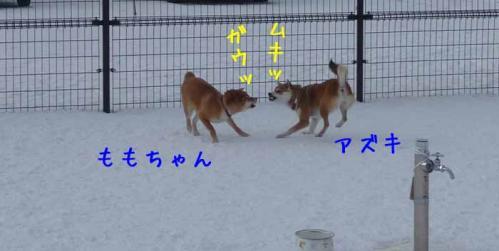 P1340450-AZUKI-AZUKII.jpg