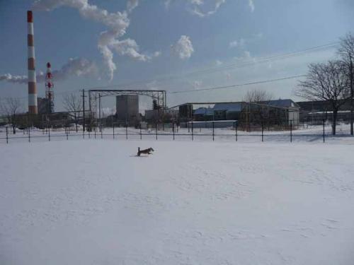 P1340458-AZUKII.jpg