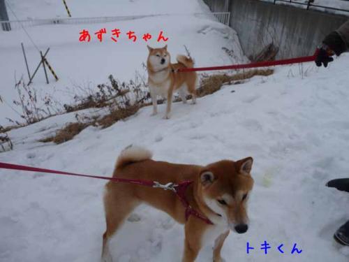 P1340904-AZUKI.jpg