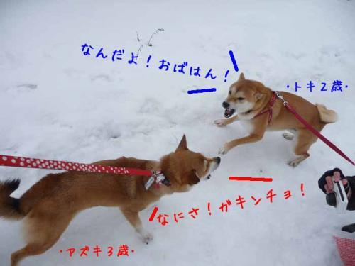 P1340912-AZUKI.jpg