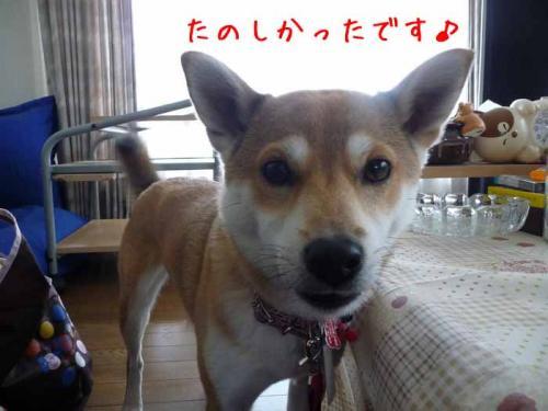P1340938-AZUKI.jpg