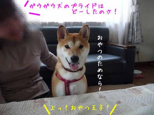 P1340945-AZUKI.jpg