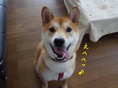 P1340984-AZUKI.jpg