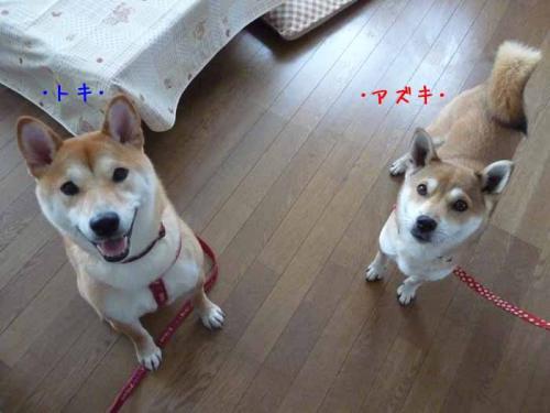P1340988-AZUKI.jpg