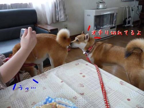 P1340996-AZUKI.jpg