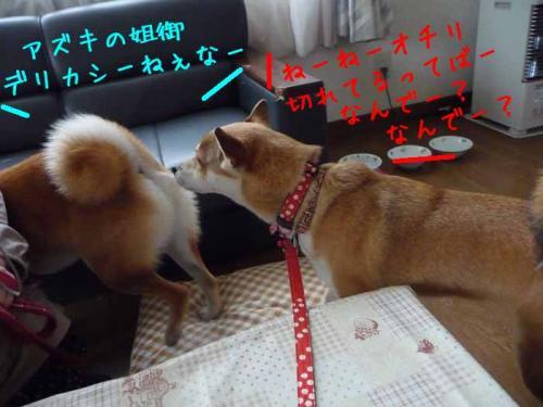 P1340997-AZUKI.jpg