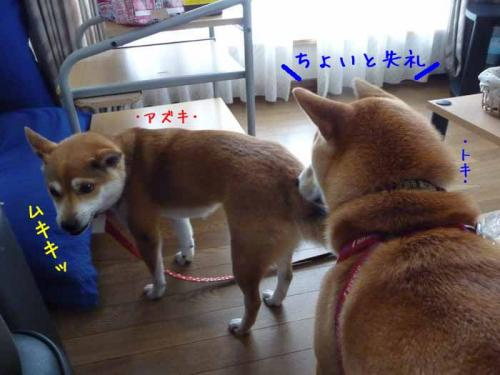 P1350009-AZUKI.jpg