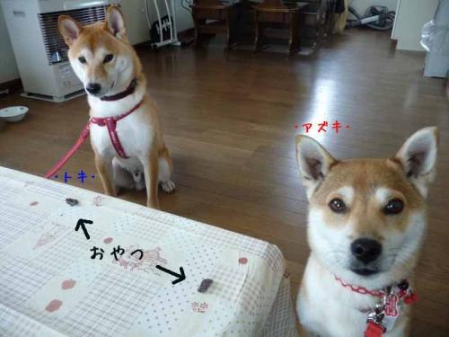 P1350025-AZUKI.jpg