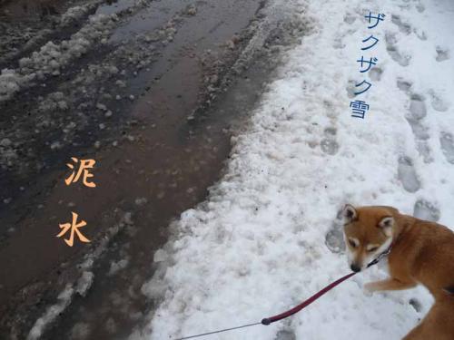 P1350064-AZUKI.jpg