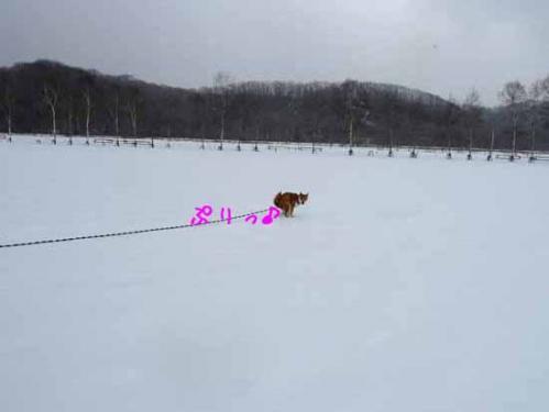 P1350222-AZUKI.jpg