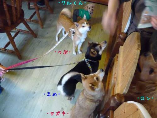 P1350496-AZUKI.jpg
