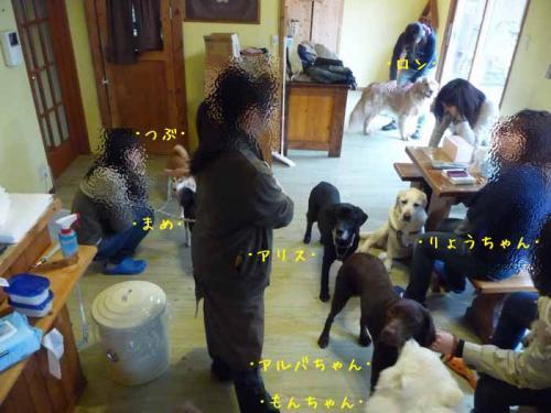 P1350509-AZUKI.jpg