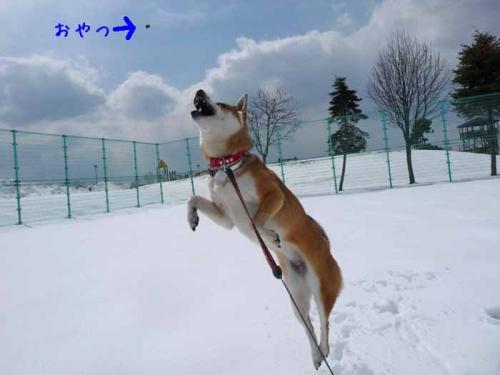 P1350713-AZUKI.jpg