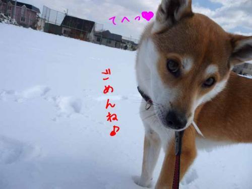 P1350756-AZUKI.jpg