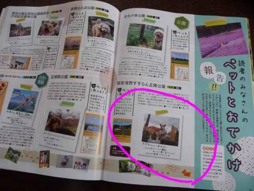 P1350818-AZUKI.jpg