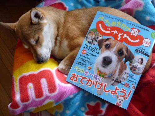 P1350829-AZUKI.jpg