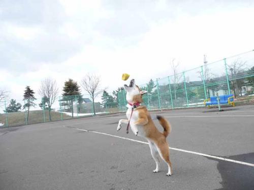 P1350834-AZUKI.jpg