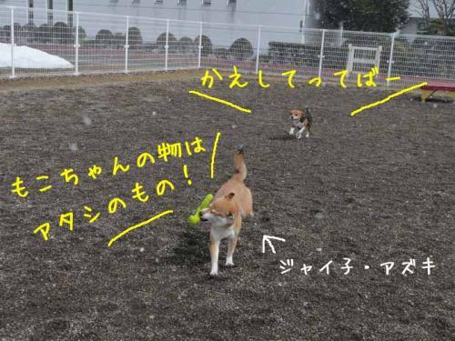 P1350920-AZUKI.jpg