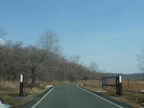 P1350934-AZUKI.jpg