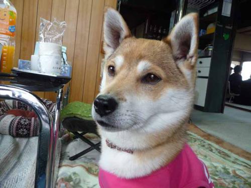 P1360060-AZUKI.jpg