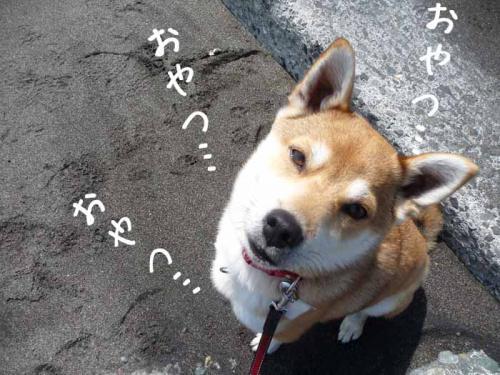 P1360187-AZUKI.jpg