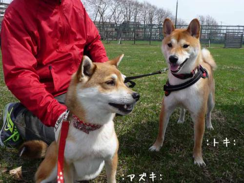 P1360262-AZUKI.jpg