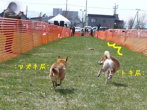 P1360339-AZUKI.jpg