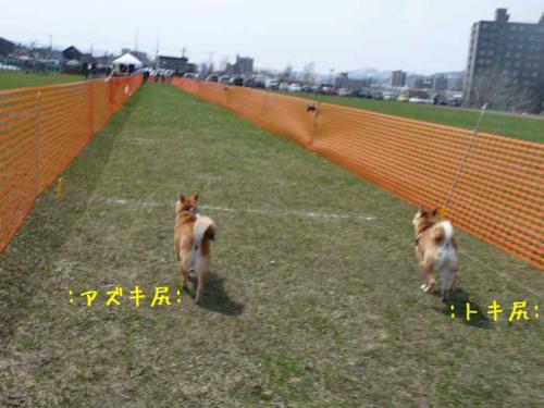 P1360341-AZUKI.jpg