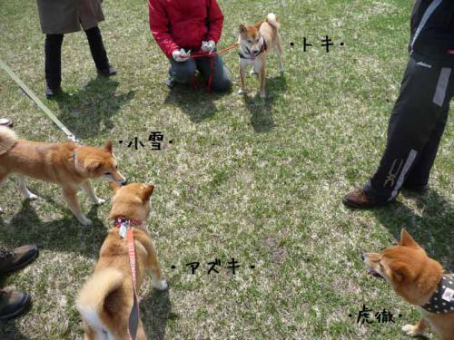 P1360349-AZUKI.jpg