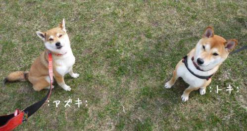 P1360440-AZUKI.jpg
