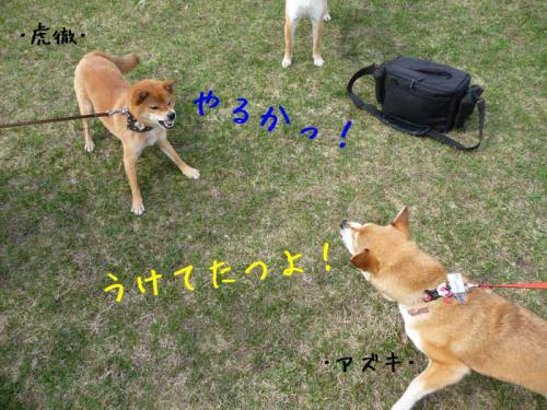 P1360446-AZUKI.jpg