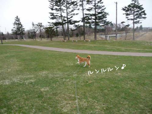 P1360501-AZUKI.jpg